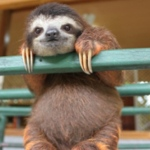 Cute Sloth Image