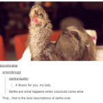 Cute and Funny Sloth Picture