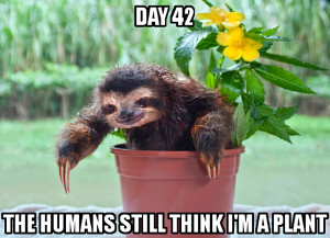 Sloth7 all things sloth pictures and memes of sloths,Sloth Meme Images