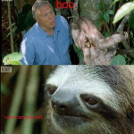 Funny BBC Sloth Picture