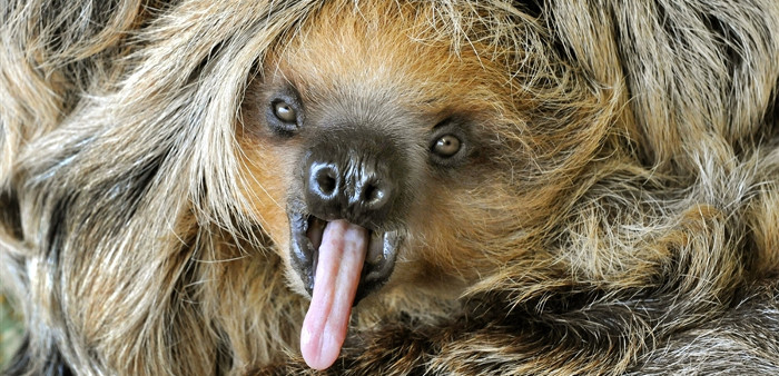 All Things Sloth | Facts About Sloths