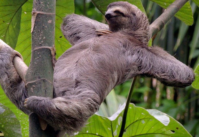 all sloths