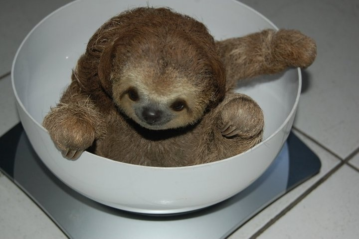 8 cute sloths that will brighten your day all things sloth