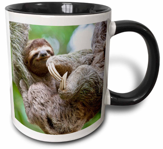 Magic Transforming Sloth Mug