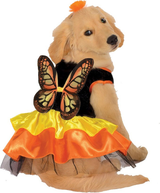 Funny Butterfly Pet Costume