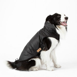 Pet Apparel Waterproof Dog Coat with Harness